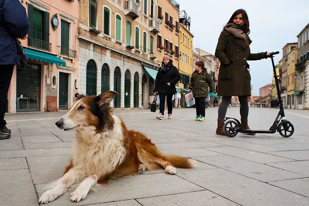 Penny, our scotch collie, having a rest in the Via Garibaldi.