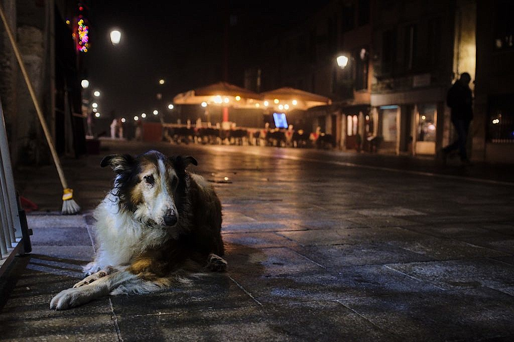 Penny in the Via Garibaldi for her evening walk with a bit of mist. Being old she likes to rest at the local bar, even though it was closing.